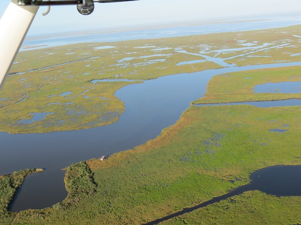 Coastal wetlands from the air