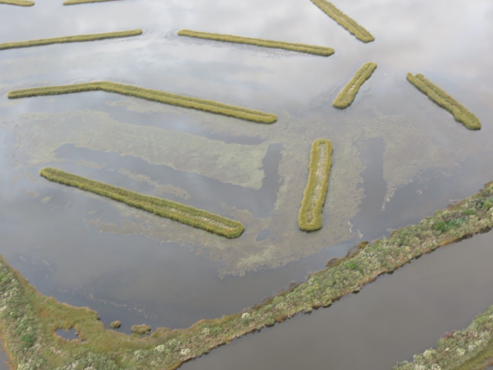 Marsh terraces in Louisiana
