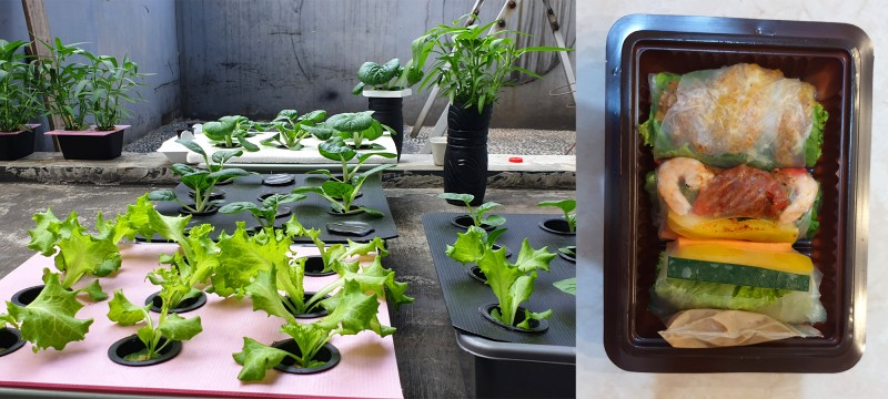 Leafy plants growing in containers; package of soft spring rolls