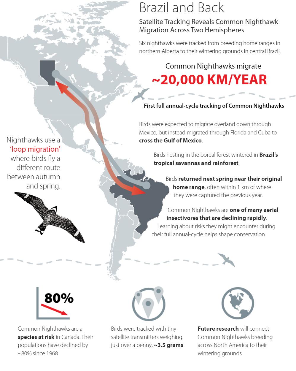 迁移鸟信息图表图