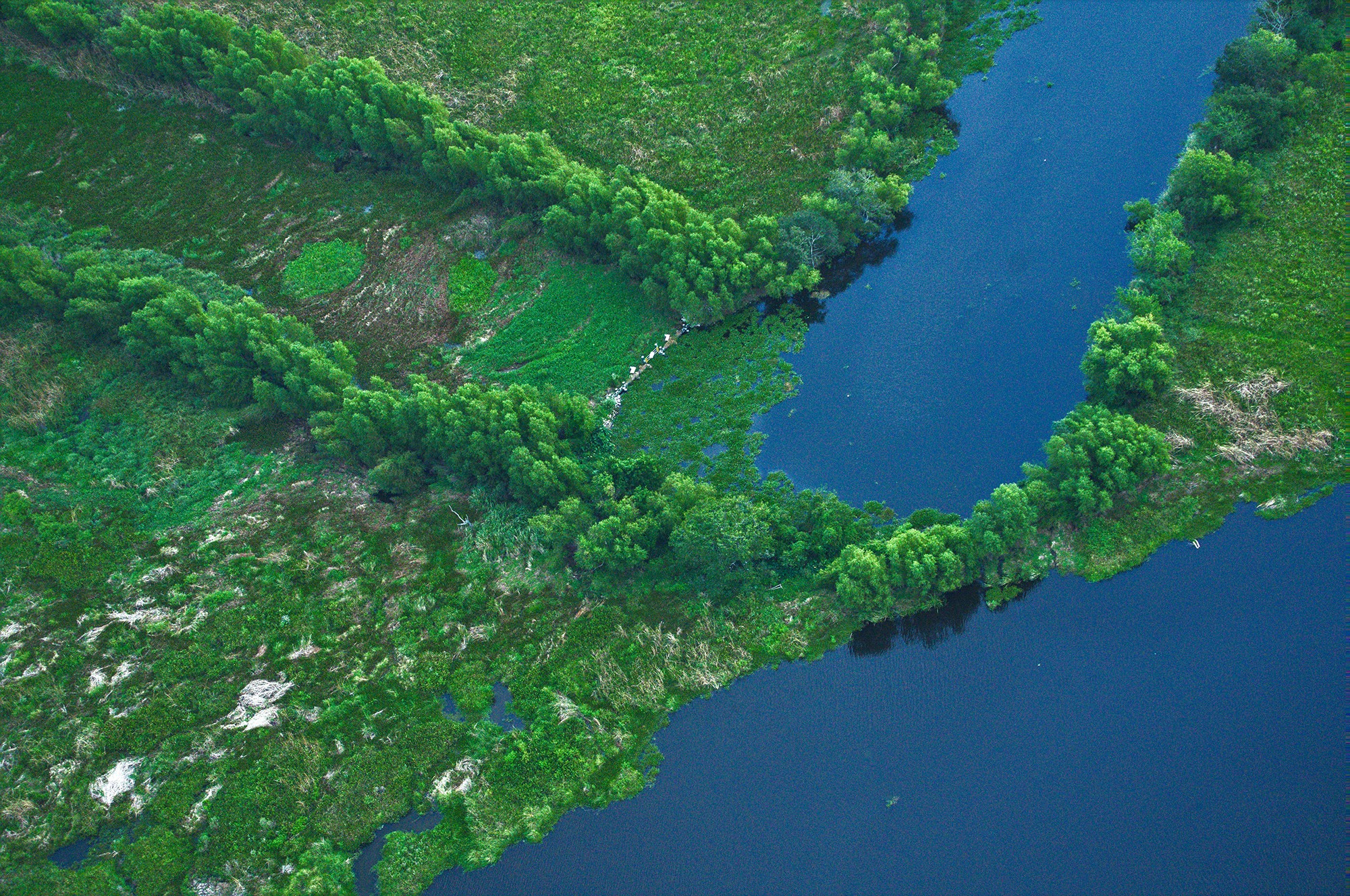 aerial view of green marshland and blue water